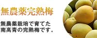 無農薬完熟梅(南高梅)販売・通販