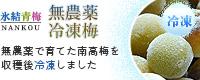 冷凍梅(無農薬南高梅)販売・通販