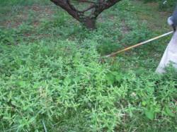 秋の草刈2