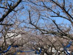 梅の花20130203