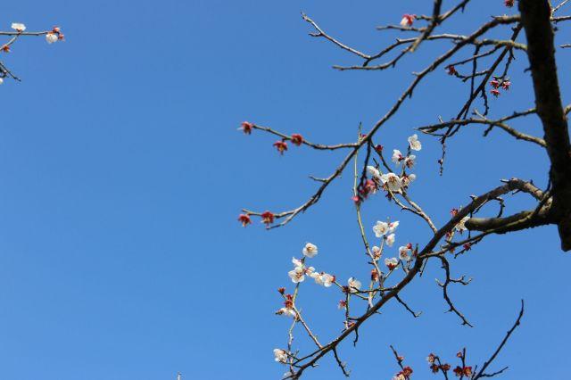 梅とみつばち4