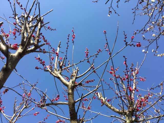 梅の花 1802002
