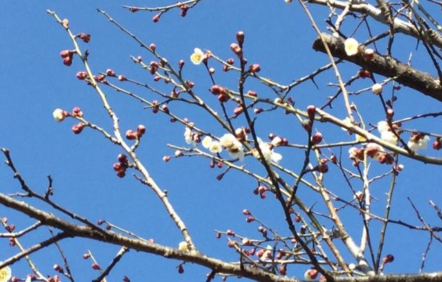梅の花 1802004