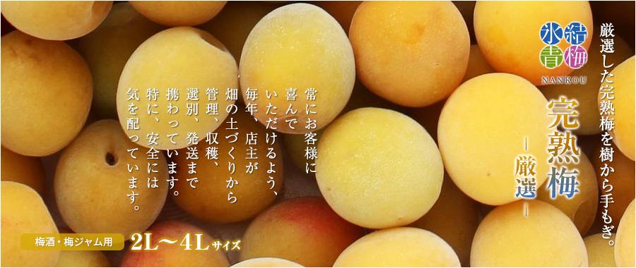 厳選完熟南高梅を冷凍にした冷凍梅(平成30年度収穫の完熟梅)です。梅酒・梅ジャム・梅ジュースにお使い下さい。