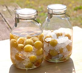 冷凍梅で漬ける梅酒と梅ジュース